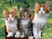 lots-of-cats-together-wallpaper-1